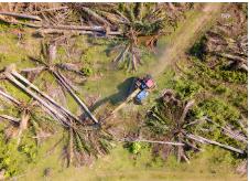 palm tree removal Brisbane cost