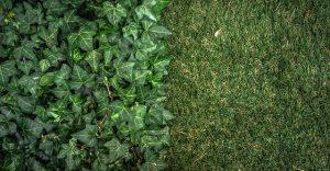 adelaide-artificial-grass